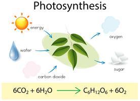 Une éducation scientifique de la photosynthèse vecteur