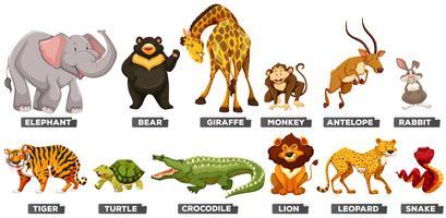 Animaux sauvages dans de nombreux types