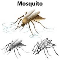 Caractère de rédaction pour moustique vecteur