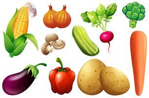 Un ensemble de légumes biologiques vecteur