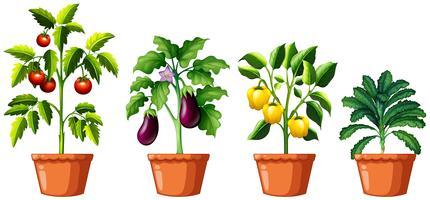 Ensemble de différentes plantes vecteur