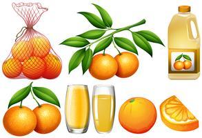 Oranges et produits à l'orange vecteur