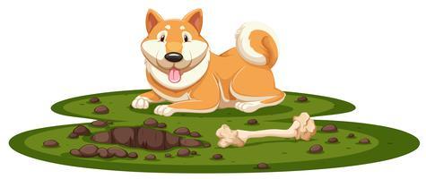 Un chien Shiba sur fond blanc