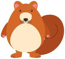 Écureuil brun sur fond blanc