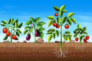 Ensemble de différentes plantes de fruits et de légumes vecteur