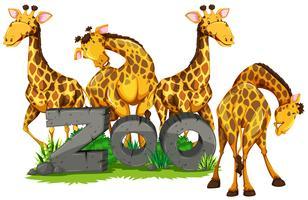 Quatre girafes au zoo vecteur