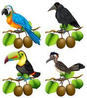 Différents types d'oiseaux sur une branche de kiwi