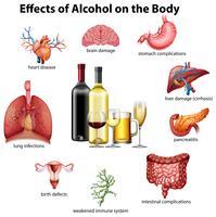 Effets de l'alcool sur le corps vecteur