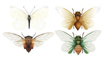 Vecteur d'insectes cigale sur fond blanc