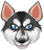 Tête d'un husky