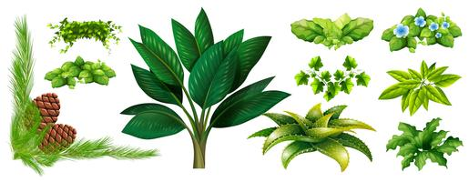 Différents types de plantes