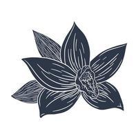 illustration gravée de silhouette de fleur de vanille vecteur
