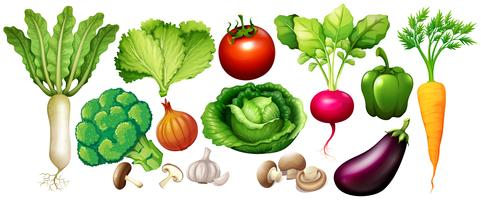 Différents types de légumes vecteur