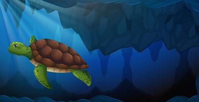 Une tortue verte sous l'eau
