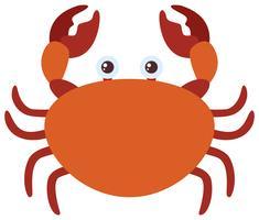 Crabe brun sur fond blanc vecteur