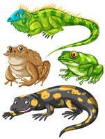 Différents types de grenouilles et de lézards vecteur