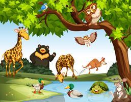 Beaucoup d'animaux sauvages dans le parc vecteur
