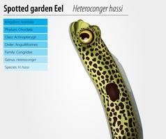 Anguille de jardin tacheté