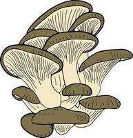 illustration dessinée à la main de pleurotes. style de croquis vecteur