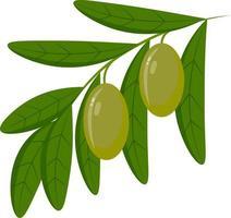 une icône d'olive, une branche avec des olives et des feuilles vecteur