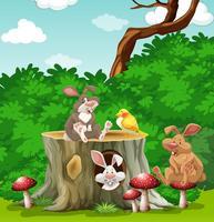 Lapins et oiseaux dans le jardin