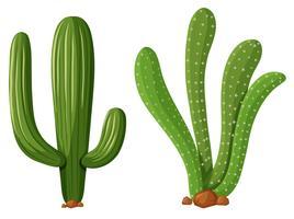 Deux types de plantes de cactus