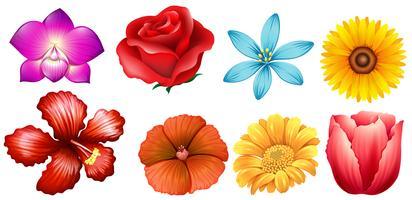 Différents types de fleurs vecteur
