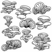 ensemble de collection de dessins de croquis à main levée doodle de pleurotes vecteur