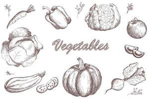 ensemble de légumes. citrouille tomate carotte chou courgette poivron vecteur