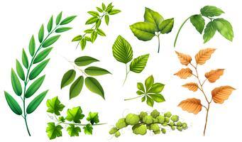 Ensemble de feuilles différentes vecteur