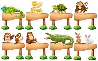 Panneau en bois avec différents animaux sauvages vecteur