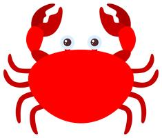 Crabe rouge sur fond blanc vecteur