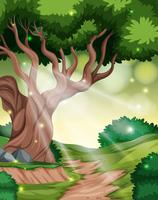 Un fond de forêt tropicale vecteur