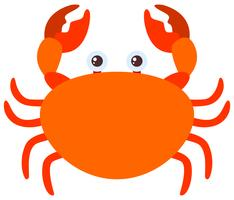 Crabe orange sur fond blanc vecteur