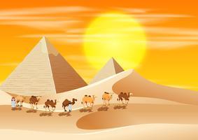 Chameaux marchant à travers le désert vecteur