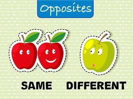 Mots opposés pour le même et différent