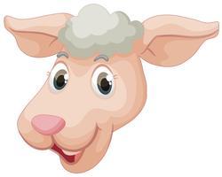 Un visage de mouton
