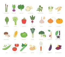 ensemble de légumes. illustration vectorielle minimale de style design plat. vecteur
