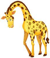 Girafe sur fond blanc vecteur