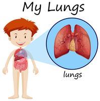 Petit garçon et diagramme de poumons vecteur