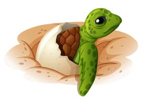 Bébé tortue sortant de sa coquille vecteur