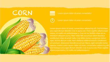 Infographie avec du maïs en épi vecteur