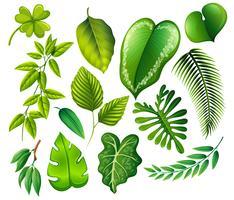 Un ensemble de feuille verte vecteur