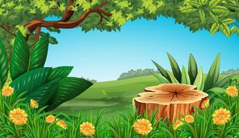 Scène avec souche arbre et champ