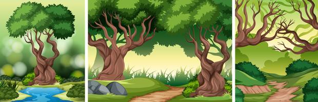 Définir le fond de la forêt tropicale vecteur