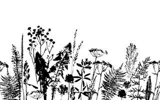 Modèle sans couture à base de plantes. Frontière botanique. Fond d'herbe de vecteur.