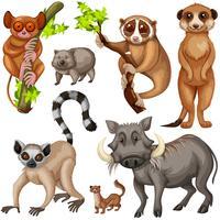 Différents types d'animaux sauvages sur fond blanc