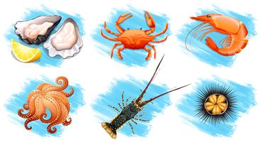 Différents types de fruits de mer