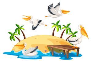 Pélican dans l'île nature