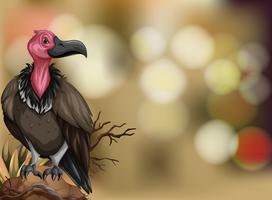 Un vautour sur fond flou